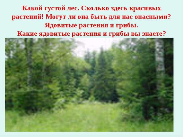 Какой густой лес. Сколько здесь красивых растений! Могут ли она быть для нас...