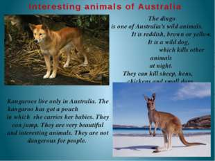 The dingo is one of Australia's wild animals. It is reddish, brown or yellow
