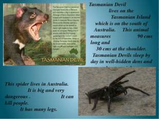 Tasmanian Devil lives on the Tasmanian Island which is on the south of Austra
