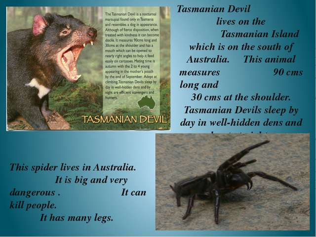 Tasmanian Devil lives on the Tasmanian Island which is on the south of Austra...