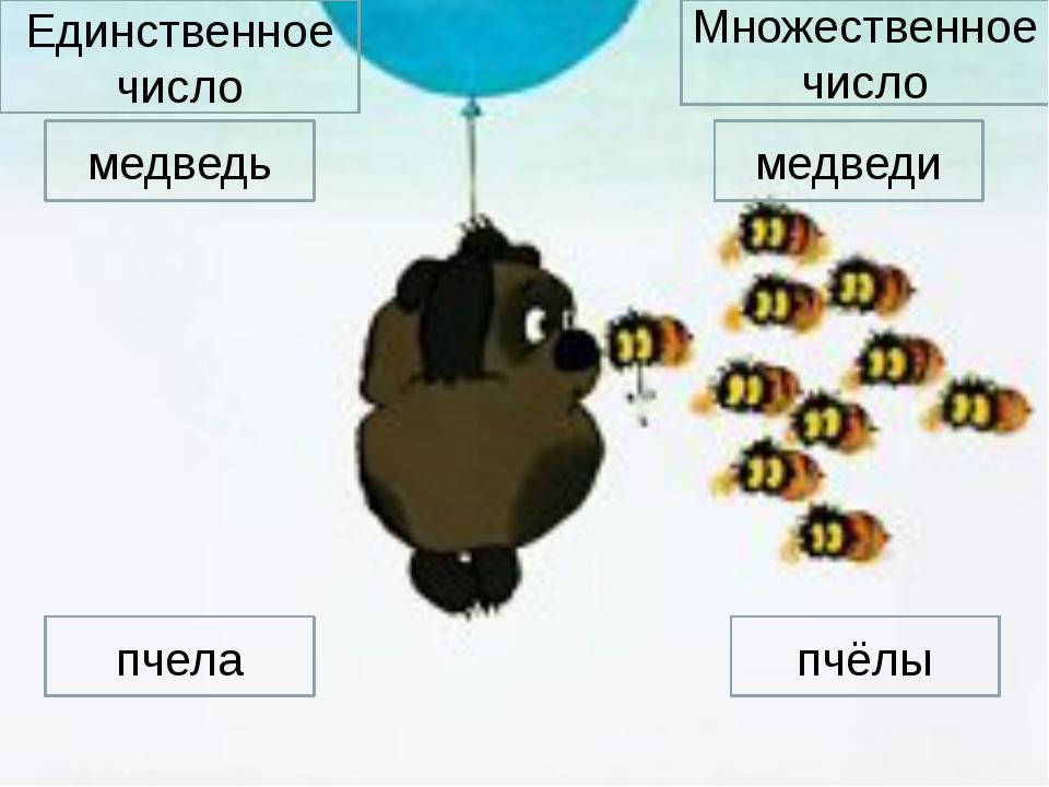 медведь медведи Единственное число Множественное число пчела пчёлы