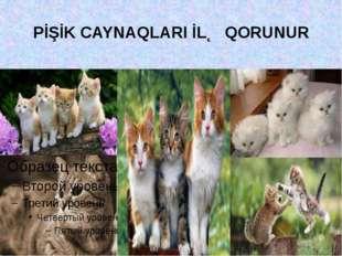 PİŞİK CAYNAQLARI İLƏ QORUNUR