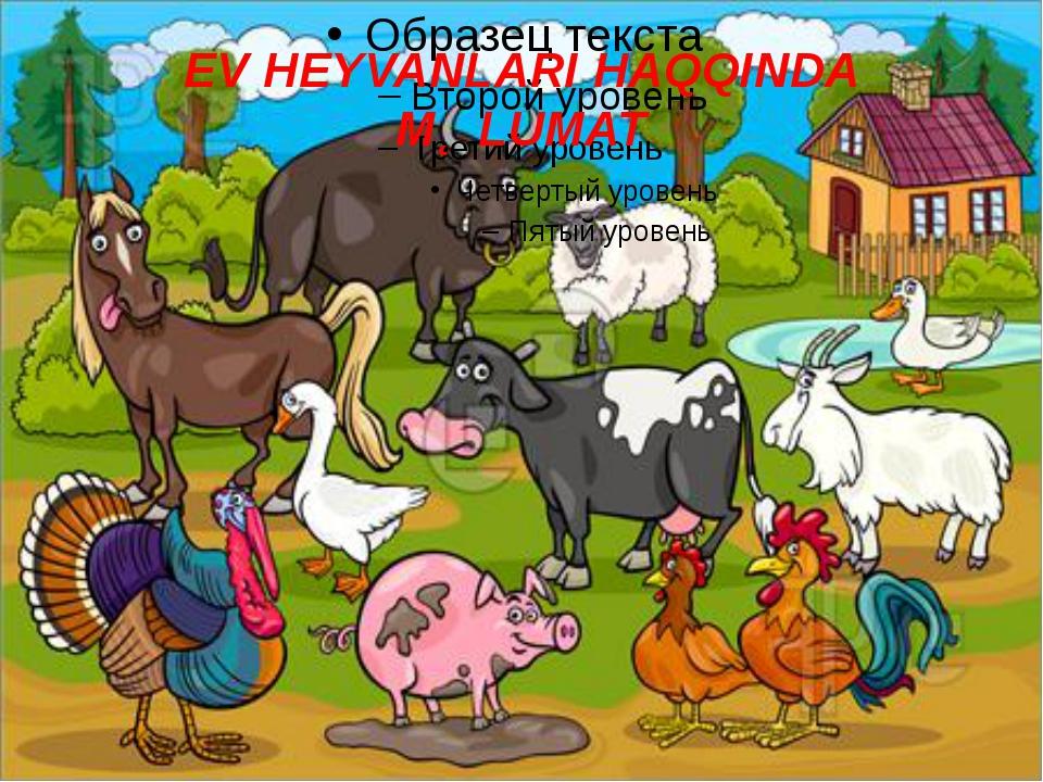 EV HEYVANLARI HAQQINDA MƏLUMAT