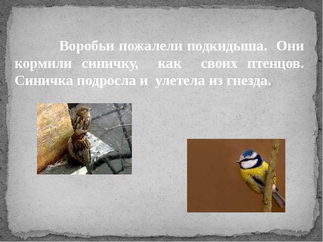 Воробьи пожалели подкидыша. Они кормили синичку, как своих птенцов. Синичка...