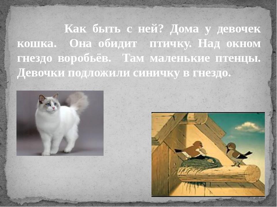 Как быть с ней? Дома у девочек кошка. Она обидит птичку. Над окном гнездо во...