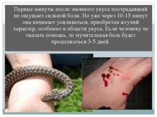 Первые минуты после змеиного укуса пострадавший не ощущает сильной боли. Но