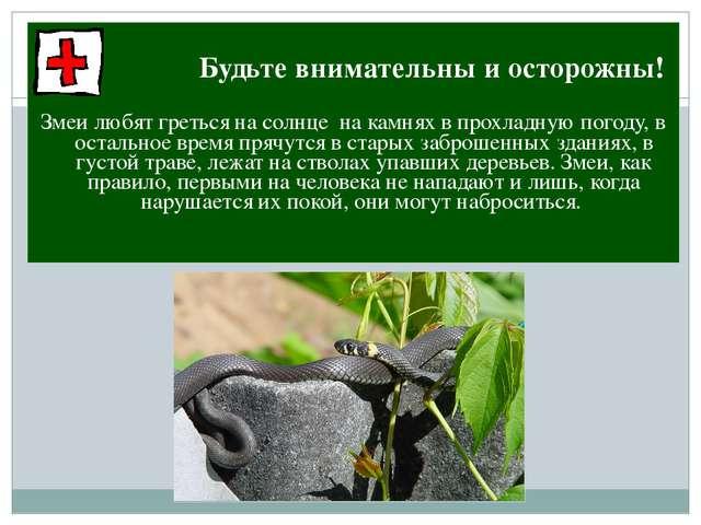 Будьте внимательны и осторожны! Змеи любят греться на солнце на камнях в про...