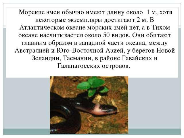 Морские змеи обычно имеют длину около 1 м, хотя некоторые экземпляры достига...