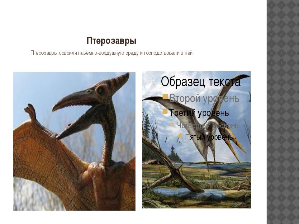 Птерозавры Птерозавры освоили наземно-воздушную среду и господствовали в ней.