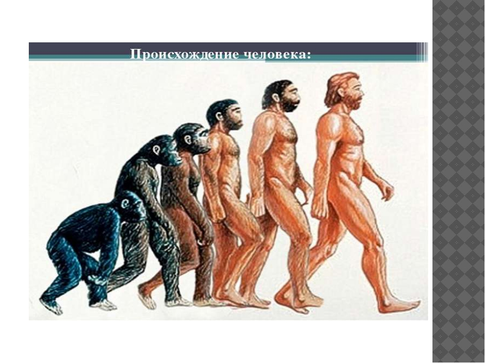 a comparison of the life of human and beast
