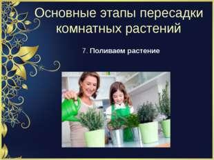 Основные этапы пересадки комнатных растений 7. Поливаем растение