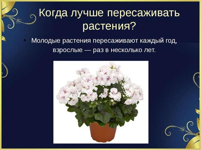 Когда лучше пересаживать растения? Молодые растения пересаживают каждый год,...
