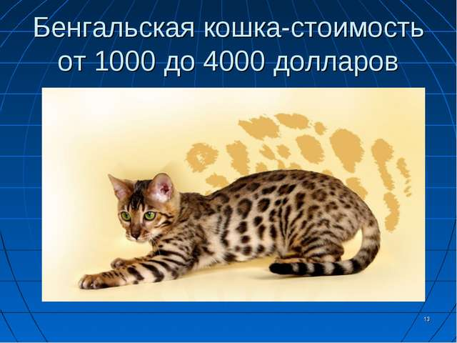 Бенгальская кошка-стоимость от 1000 до 4000 долларов *