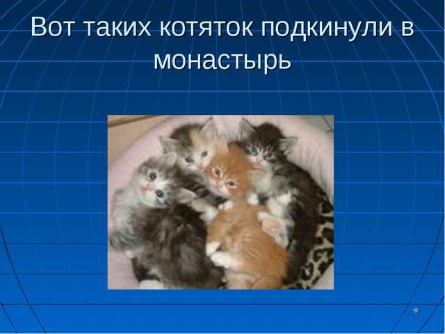 Вот таких котяток подкинули в монастырь *