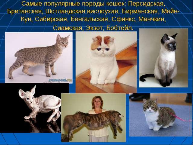 Самые популярные породы кошек: Персидская, Британская, Шотландская вислоухая,...