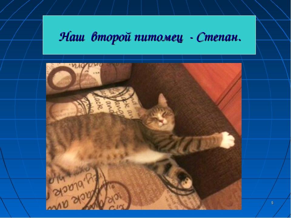 * Наш второй питомец - Степан.