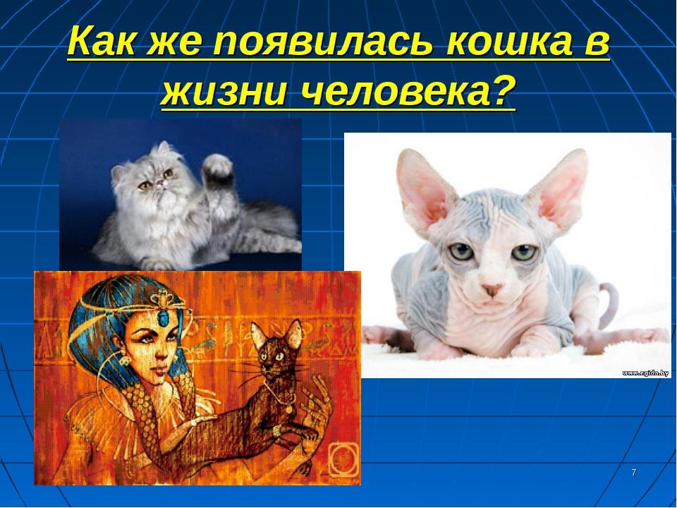 Как же появилась кошка в жизни человека? *