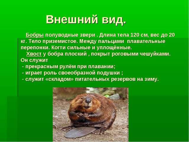 Внешний вид. Бобры полуводные звери . Длина тела 120 см, вес до 20 кг. Тело...