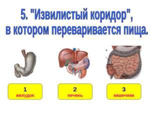 1 желудок 3 кишечник 2 печень