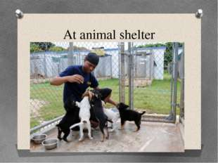 At animal shelter