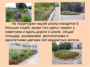 На территории нашей школы находятся 5 больших клумб, кроме того цветы сажают