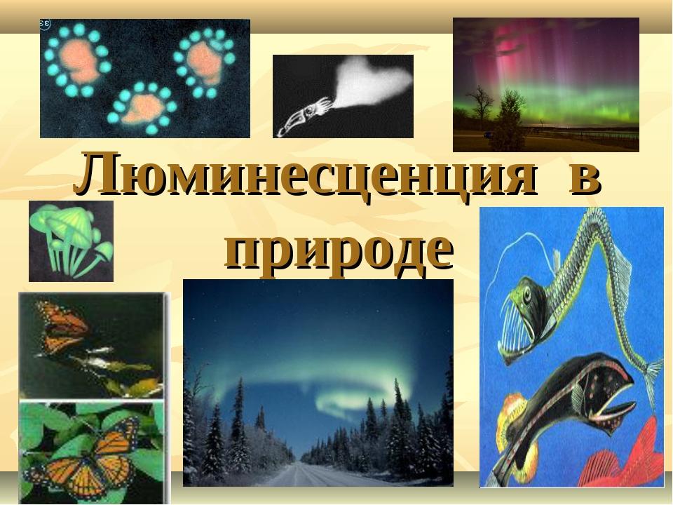 Люминесценция в природе