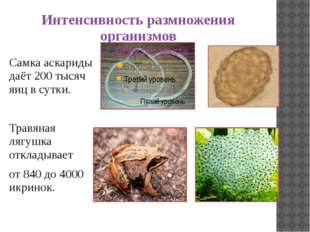 Интенсивность размножения организмов Самка аскариды даёт 200 тысяч яиц в сутк