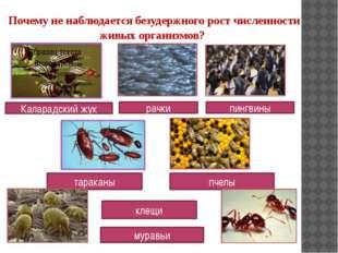 Почему не наблюдается безудержного рост численности живых организмов? Калара