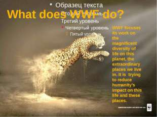 What does WWF do? WWF focuses its work on the magnificent diversity of life