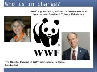 Who is in charge? WWF is governed by a Board of Trusteesunder an Internationa