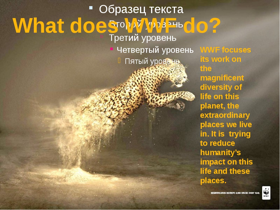 What does WWF do? WWF focuses its work on the magnificent diversity of life...
