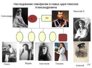 Наследование гемофилии в семье царя Николая Александровича Ольга Мария Анаста