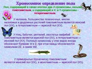 Хромосомное определение пола У человека, большинства позвоночных, многих нас