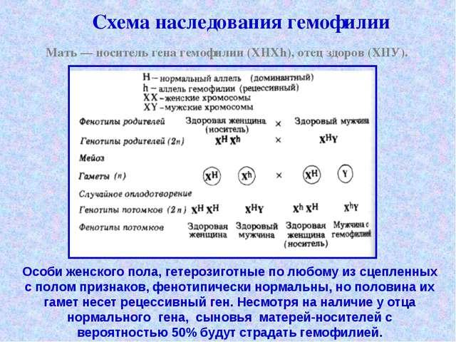 Схема наследования гемофилии Мать — носитель гена гемофилии (XHXh), отец здо...