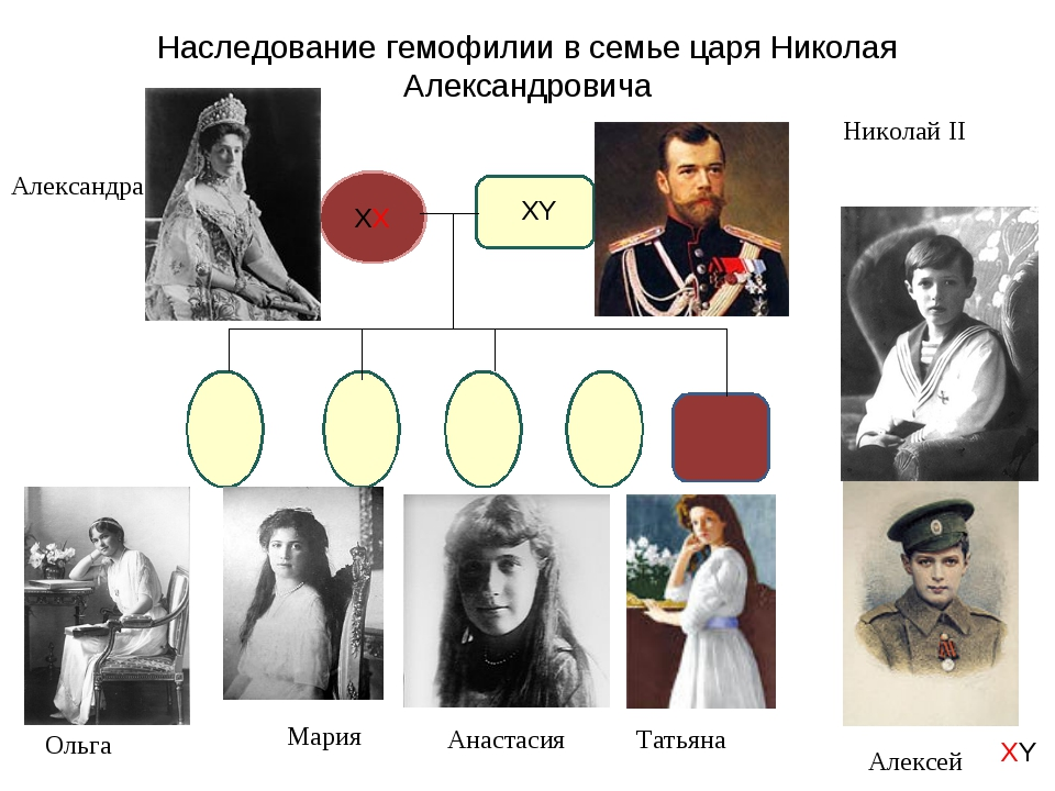 Наследование гемофилии в семье царя Николая Александровича Ольга Мария Анаста...