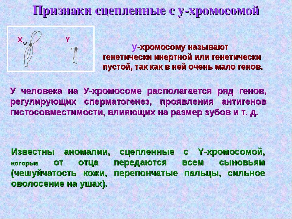 Признаки сцепленные с у-хромосомой у-хромосому называют генетически инертной...