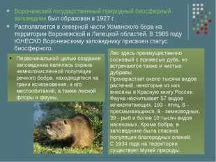 Воронежский государственный природный биосферный заповедник был образован в 1