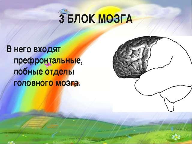 3 БЛОК МОЗГА В него входят префронтальные, лобные отделы головного мозга.