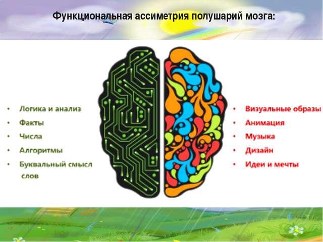 Функциональная ассиметрия полушарий мозга: