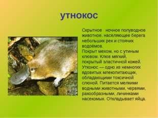 утнокос Скрытное  ночноеполуводное животное, населяющее берега небольших ре