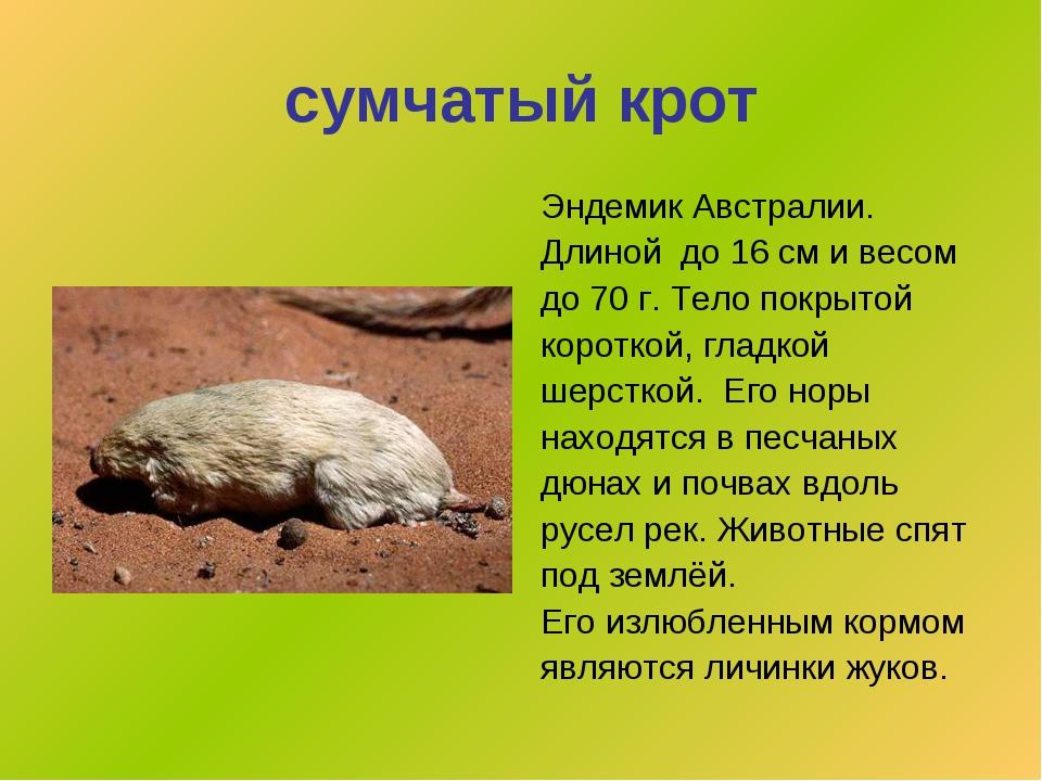 сумчатый крот Эндемик Австралии. Длиной до 16 см и весом до 70 г. Тело покрыт...