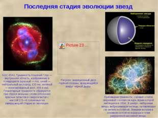 Последняя стадия эволюции звезд Крабовидная туманность - газовый остаток свер