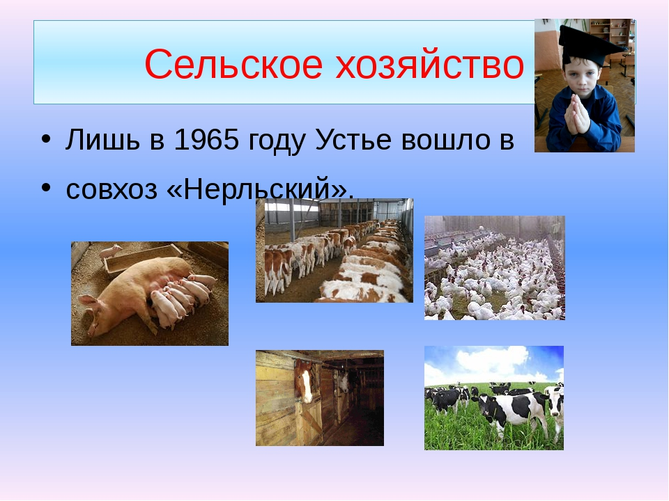 Сельское хозяйство Лишь в 1965 году Устье вошло в совхоз «Нерльский».