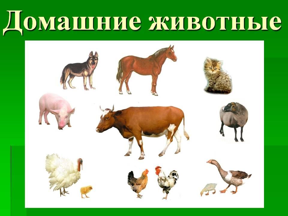 http://900igr.net/datas/okruzhajuschij-mir/Domashnie-i-dikie/0003-003-Domashnie-zhivotnye.jpg