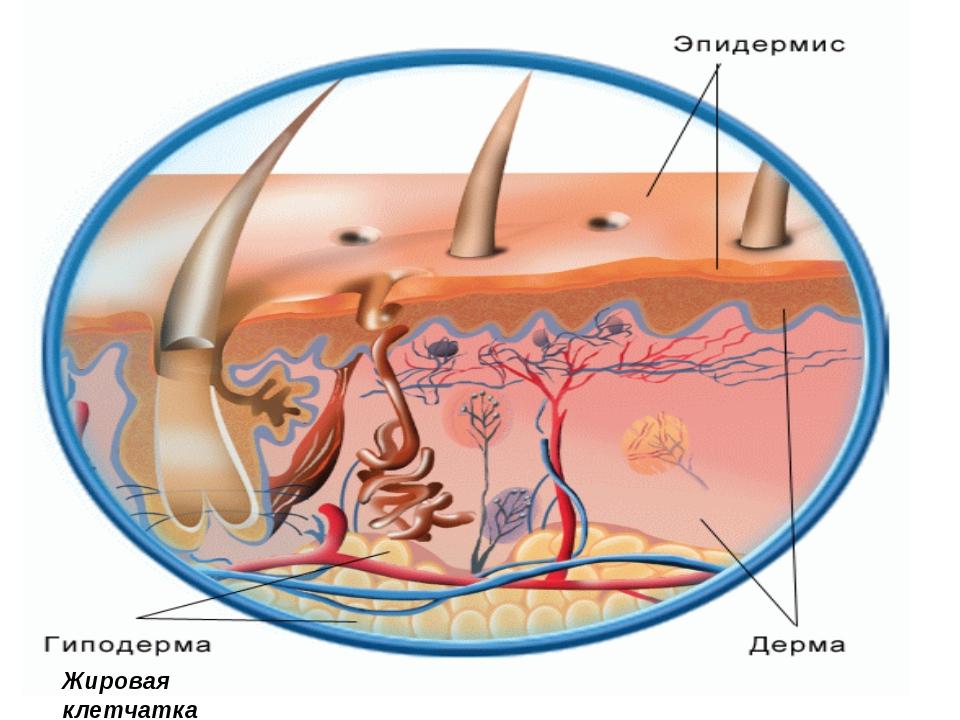 Атрофия подкожно жировой клетчатки
