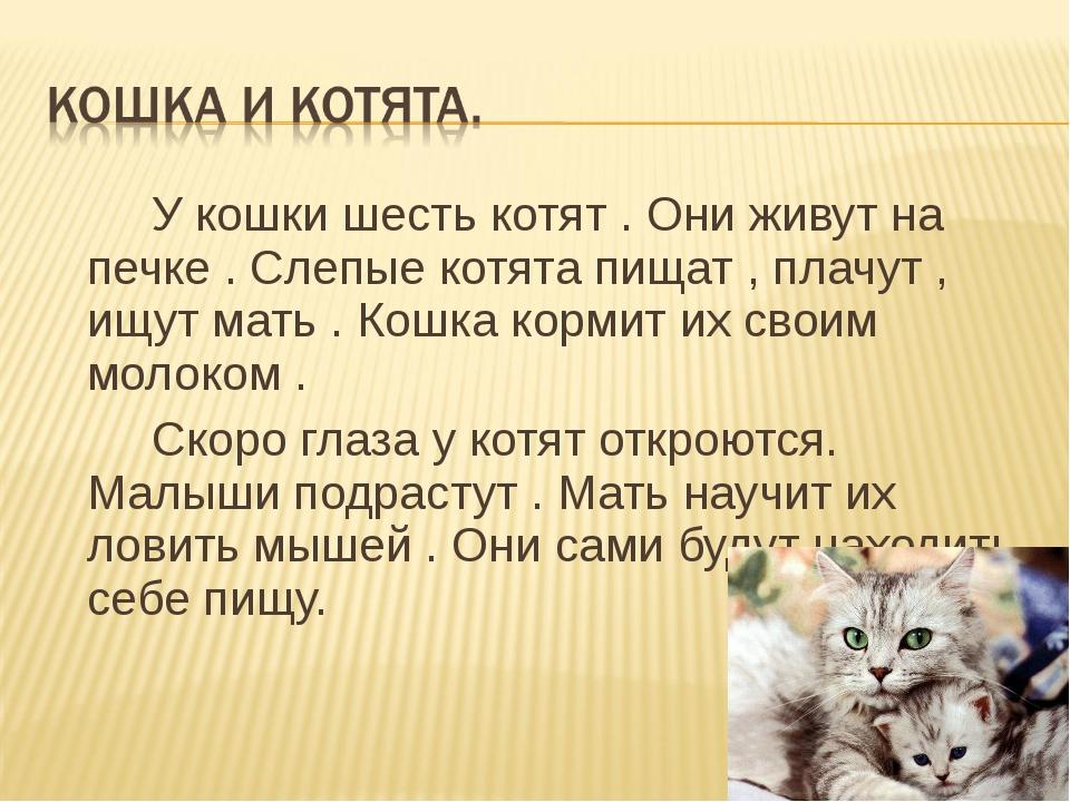 У кошки шесть котят . Они живут на печке . Слепые котята пищат , плачут , ищ...