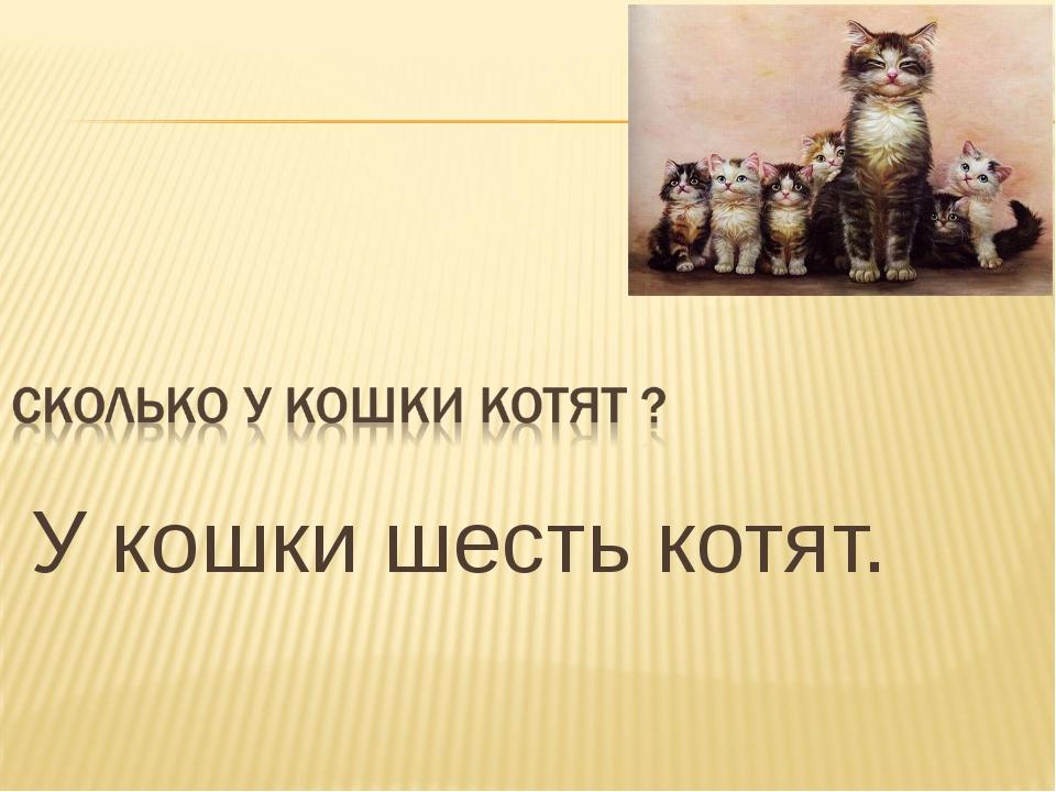 У кошки шесть котят.
