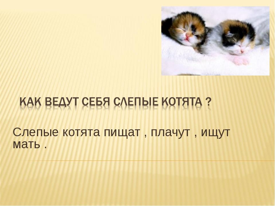 Слепые котята пищат , плачут , ищут мать .