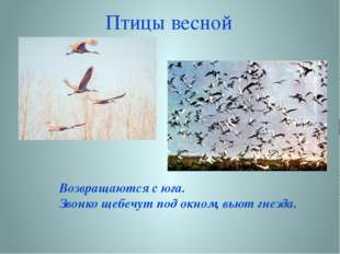 Птицы весной Возвращаются с юга. Звонко щебечут под окном, вьют гнезда.