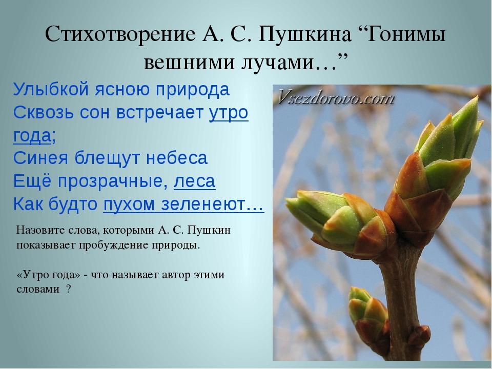 """Стихотворение А. С. Пушкина """"Гонимы вешними лучами…"""" Улыбкой ясною природа Ск..."""